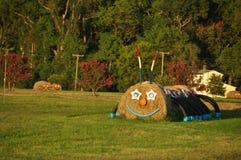 Cute hays Royalty Free Stock Photo