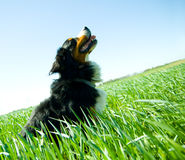 A cute, healthy dog on the field Royalty Free Stock Image