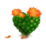 Cute Heart Cactus  on White Background Stock Photography
