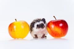 Cute hedgehog Stock Photography