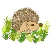 Cute hedgehog cartoon. In the grass Royalty Free Stock Photo