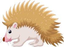 Cute hedgehog cartoon Stock Images