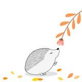 Cute Hedgehog smelling a flower. Illustration of a cute Hedgehog smelling a flower Stock Images