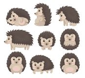 Cute hedgehog in various poses set, lovely prickly animal cartoon character vector Illustration on a white background. Cute hedgehog in various poses set, lovely vector illustration