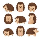 Cute hedgehog in various poses set, prickly animal cartoon character with funny face vector Illustration on a white. Cute hedgehog in various poses set, prickly stock illustration