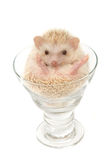 Cute hedgehog in the wine glass Stock Images