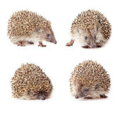 Cute hedgehogs Stock Photo