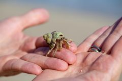 Hermit crab holding man by hand Royalty Free Stock Images