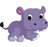 Cute hippo Royalty Free Stock Photo