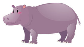 Cute hippo on white background. Illustration Stock Photos