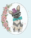Cute hipster dog Royalty Free Stock Images