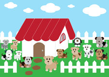 Cute home cute dogs Stock Photography