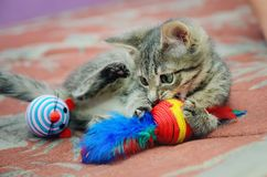 Cute home kitten playing with toys royalty free stock images
