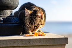 Homeless cat eating food stock images