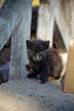 Cute homeless cat Royalty Free Stock Image
