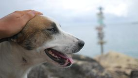 Cute homeless dog portrait at sea shore background. Hd, slowmotion. stock video footage