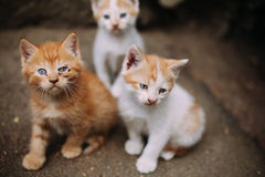 Cute homeless sick kittens on street in summer Stock Photos