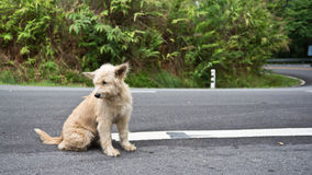 Cute homeless stray dog. On the road stock image