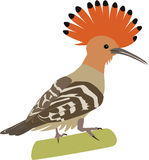 Cute hoopoe vector. Cute colorful hoopoe cartoon vector stock illustration