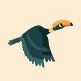 Cute hornbill . Stock Photos