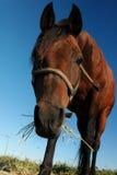 Cute horse Stock Image