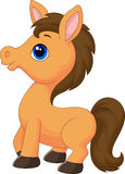 Cute horse cartoon Royalty Free Stock Images