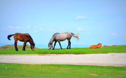 Cute horse family Royalty Free Stock Images