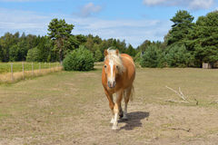 Cute horse on field Royalty Free Stock Images