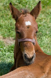 Cute Horse Resting Royalty Free Stock Images