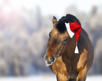 Cute horse in santa hat showing tongue Stock Images
