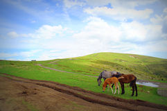 Cute horses pastoral scene Royalty Free Stock Image