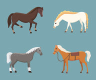 Cute horses in various poses vector design. Cartoon farm wild isolated horse and different silhouette of flat pony Royalty Free Stock Photography