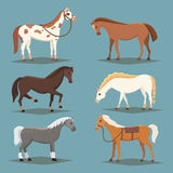 Cute horses in various poses vector design. Cartoon farm wild isolated vector hoses. Collection of animal horse standing Stock Image