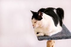 Cute house cat sits on a platform for a cat Stock Image