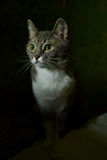 Cute house cat. Sitting in the dark Royalty Free Stock Image