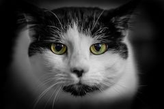 Cute House cats face close up.  royalty free stock photo