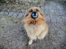 Cute hungry dog in Finland stock photography
