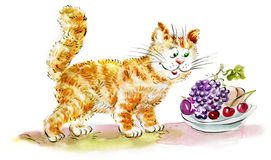 Cute hungry Ginger Cat looking at fruits. Illustration Stock Image