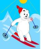 Cute ice bear skiing. Ice bear cartoon. Sporting ice bear. Ice bear on mountain. Ice bear on red ski. Ice bear winter sport. Stock Image