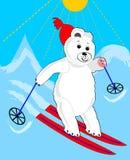 Cute ice bear skiing. Ice bear cartoon. Sporting ice bear. Stock Photography