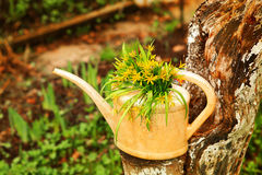 Cute idea for garden landscaping yellos flowers in plastic water Royalty Free Stock Image