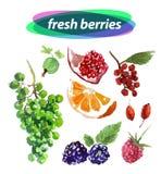 Cute illustration hand drawn fruits Stock Photo