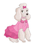 Cute illustration of a poodle in a dress on white background Stock Images
