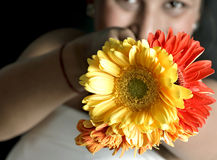 Cute indian girl with flowers Stock Images