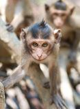 Cute infant Monkey Stock Image