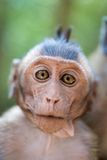 Cute infant Monkey Royalty Free Stock Photography