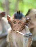 Cute infant Monkey Stock Images