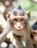Cute infant Monkey Royalty Free Stock Photo