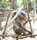 Cute infant Monkey Stock Photography