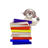 Cute intelligent dog with books isolated on white. Background Royalty Free Stock Images